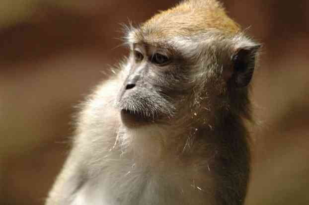 A monkey at Batu Caves