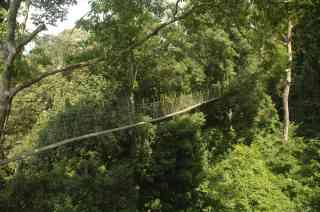 The tree top walk in Teman Negara