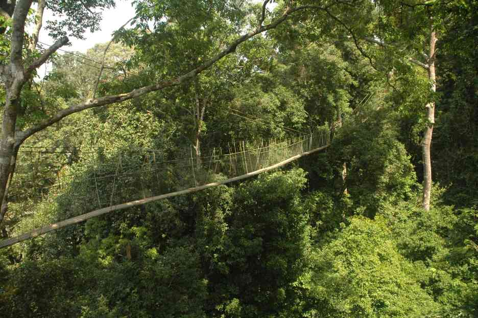The tree top walk in Teman Negara