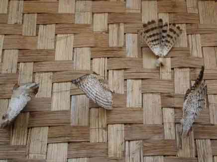 These bird feathers attached to ones house are symbols of their hunting prowess