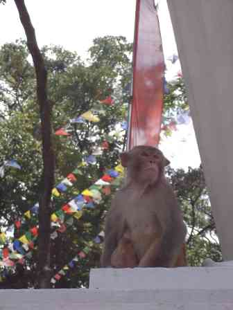 One of the many guardians of Swayambhunath