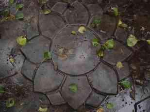 A concrete lotus