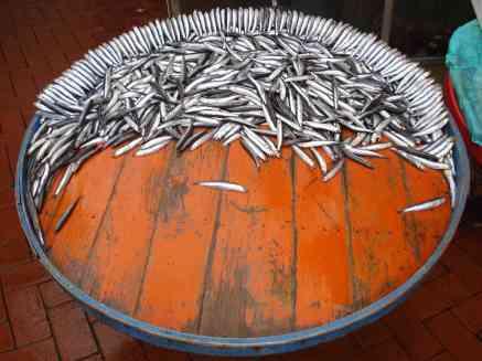 The fish markets