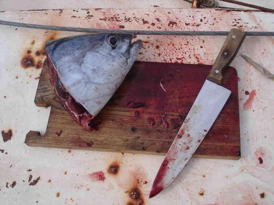 The fisherman's kill